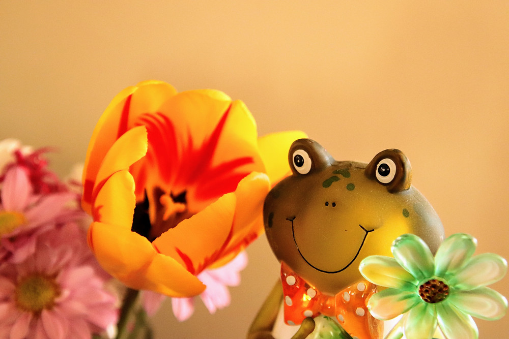 Frog and Tulip