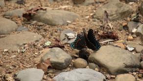 Butterfly Kisses September 2021, Wilder TN