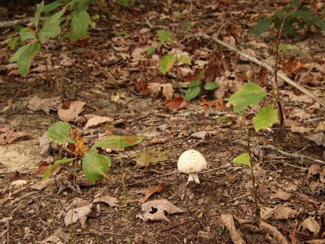 Mushroom Mania, September 2021, Wilder TN