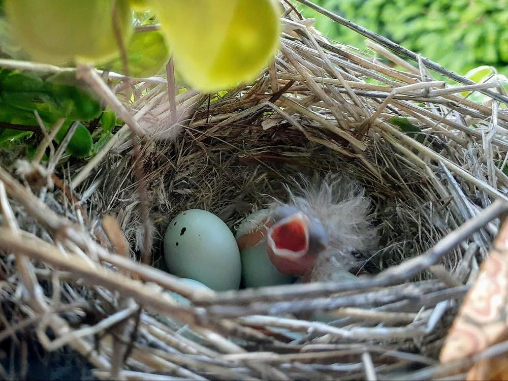 Days later, Baby Birds!