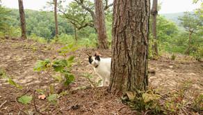 The Cat King, Wilder TN, Summer 2021