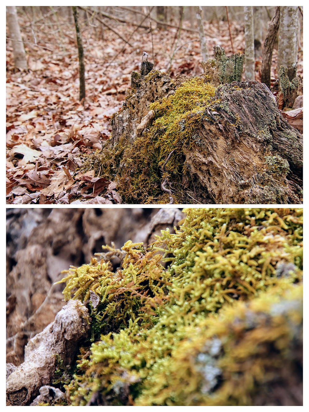 Housed in Tree Stumps