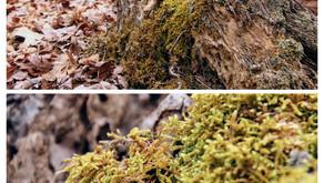 Moisture Loving Moss !