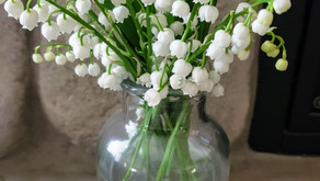 Lily Of The Valley Albion, NY Spring 2021