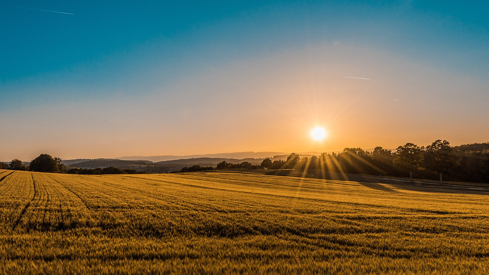 a beautiful farm at sunset