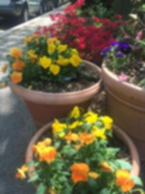 Flowers, Garden, Foggy Bottom, Historic District, Washington DC, NW DC
