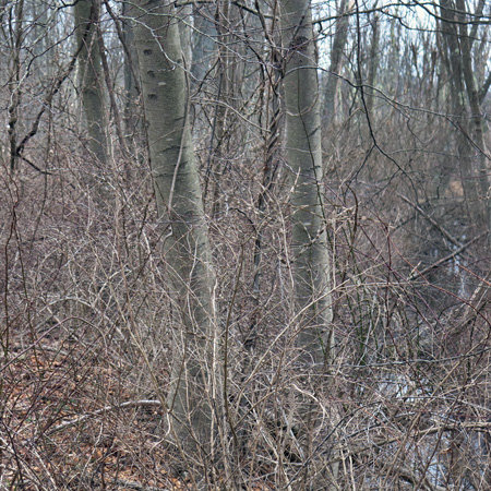 Two Trees, Silver Creek, Enhanced