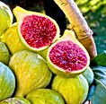 fig tree fruit.jpeg