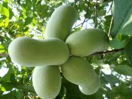 Tropical Frut grown in UK