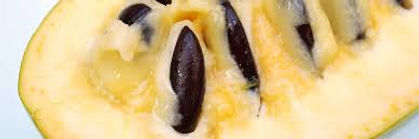 Halvin Pawpaw Fruit