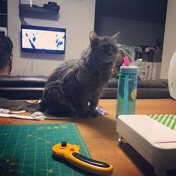 I helping! #catswhoquilt #catsofinstagram