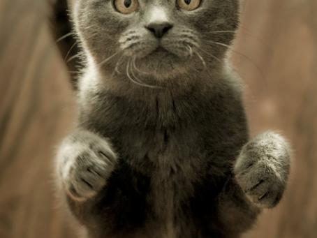 The Basics of Cat Behavior & Training
