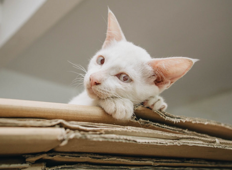 7 tips on how to help your pets have a stress-free move