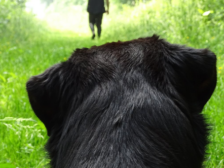 5 Hiking Hazards for your Dog (and what to do about them)