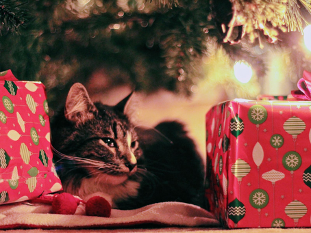 6 Holiday Safety Tips for your Pets