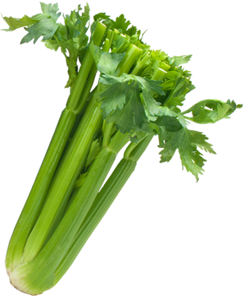 The Wonders of Celery