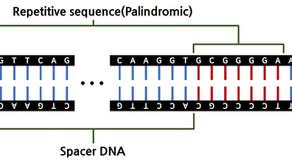 노벨 화학상의 주인공 CRISPR, 너의 정체는?