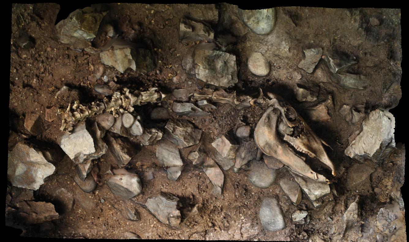 Rosemarkie Caves Project, skeleton