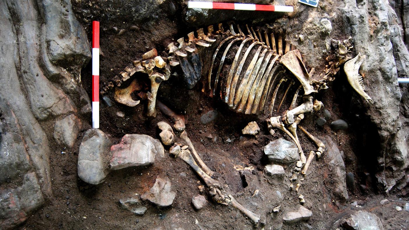 Rosemarkie Caves Project, animal skeleton
