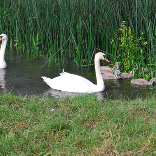 The next generation of River Thame residents.