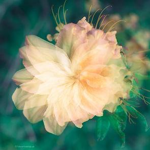 flair de fleurs
