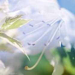 ©SusanneWeiss_N80_4133