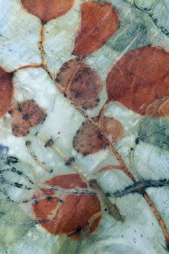 Silk Detail