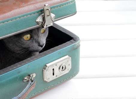 Wohin mit der Katze wenn ich verreise?