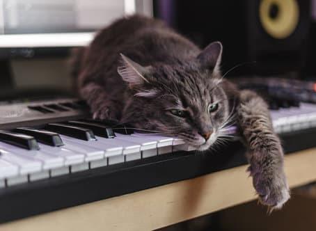 Welche Musik ist am besten geeignet, um Stress bei Katzen zu reduzieren?
