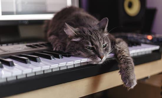 Welche Musik beruhigt Katzen?