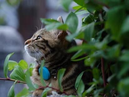 """""""Cat Tracker"""" Studie enthüllt Wege von Freigänger-Katzen"""