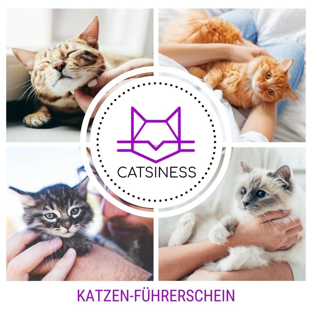 Katzen-Führerschein Hausbesuch