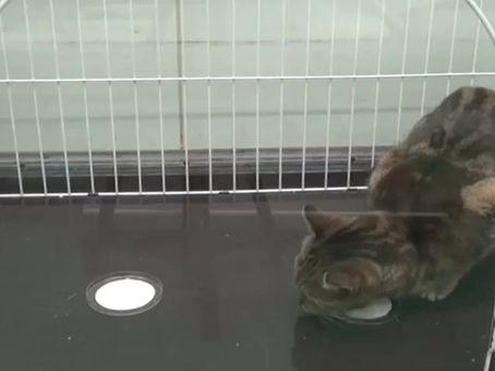 "Warum ""berauschen"" sich Katzen an Katzenminze?"