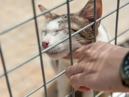 Wodurch werden Menschen bei der Auswahl einer Katze aus dem Tierheim beeinflusst?