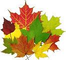 FALL+leaves.jpg