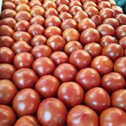 Our own staked vine-ripened tomatoes