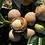 Thumbnail: Tea Tree & Tamanu Face & Body
