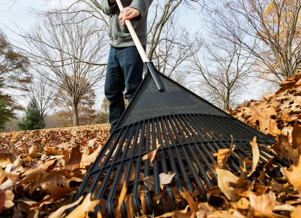 Rake Leaves for the Elderly