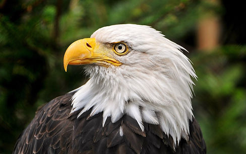 My Favorite Eagle.jpg