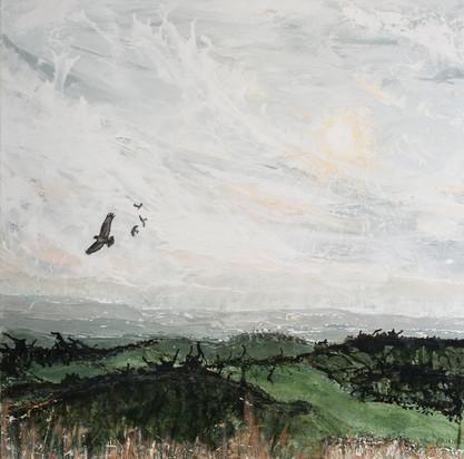 Newlands Buzzards