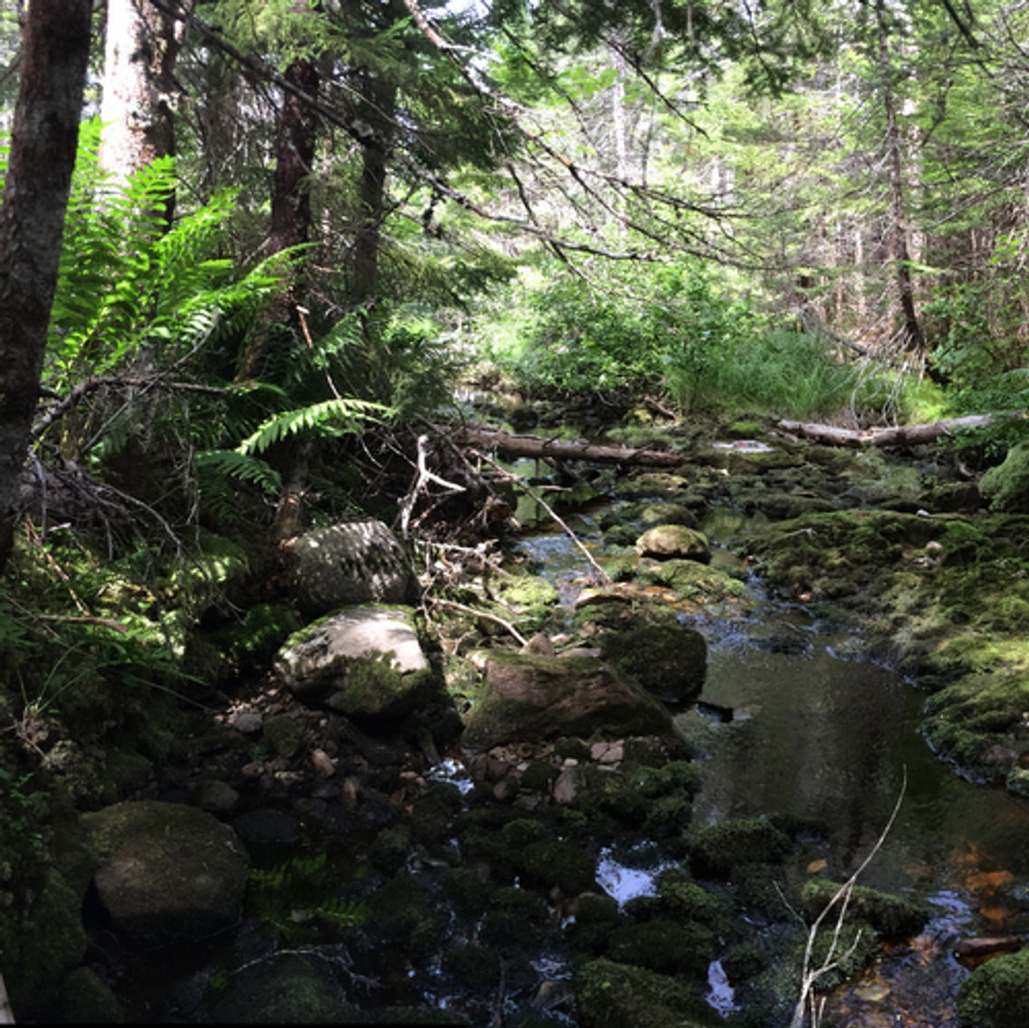 Gold Mine Brook Project