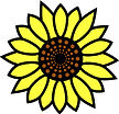 sunflower class Colorado Christian Montessori