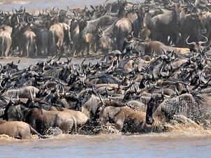 Big Migration2.png