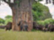 Tansania_Secrets_elephants.png
