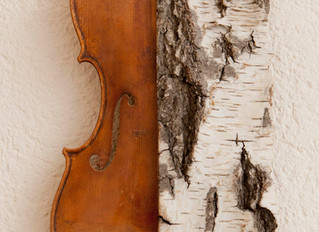 Des violons et des greffes...