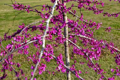 Eastside Blossoms