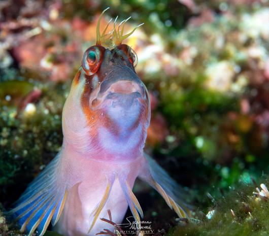 Simone Matucci | Poor Knights Island Marine Reserve