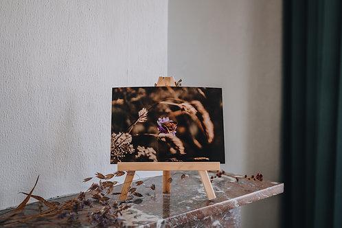 Print A5 Des Mille Rêves / vlinder