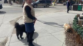 Poppy and Dude Explore Historic Breckenridge, CO: Episode 2