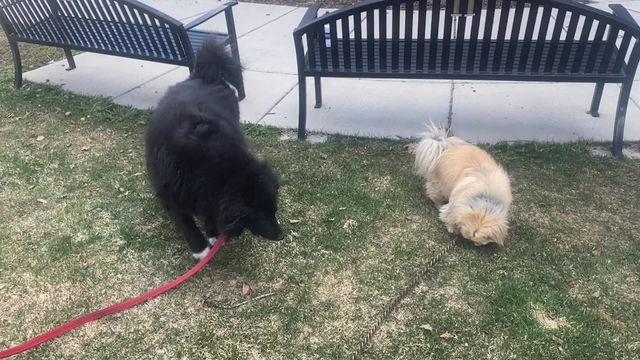 Poppy and Dude Explore Historic Breckenridge, CO: Episode 8